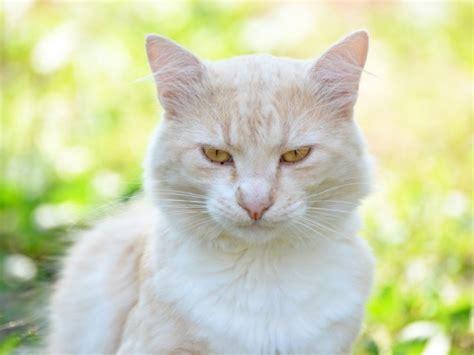 wann ist katze ausgewachsen katzen mimik k 246 rpersprache im gesicht richtig deuten