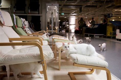 ikea inside ikea ikea cat alogue happy inside this is not