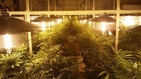 basement grow room tips  noise control   indoor