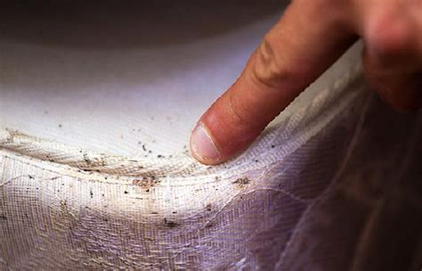 bed bug check bed bug control action pest control