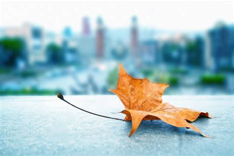 imagenes de paisajes otoño invierno paisajes de oto 241 o urbanitas para apurar el a 241 o