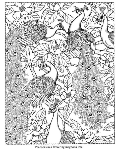 coloring pages for adults peacock free coloring pages of peacock