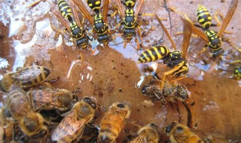 Bee Traning professional wasp and bee newlands