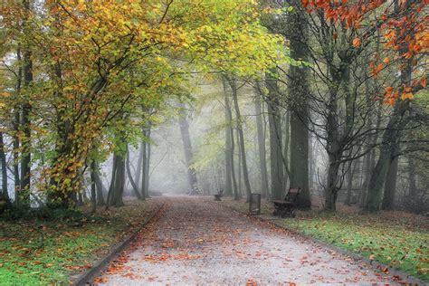 autumn park  belgium    forest
