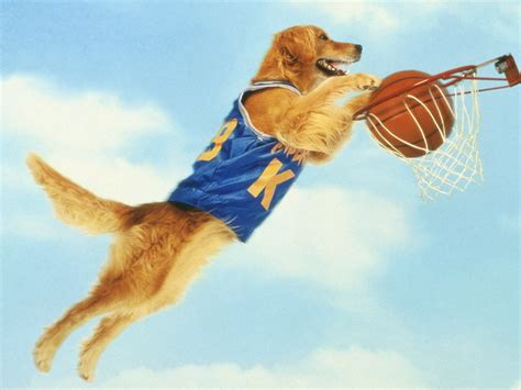 air bud the dog is in the house fascinating facts about dog movie stars you probably don t know