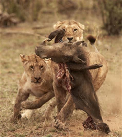 kenya photographic safari  masai mara lake nakuru