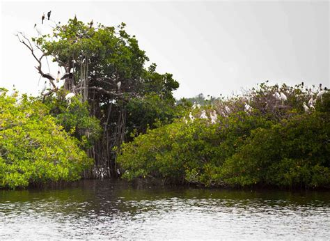 fort myers boat tours river tours in fort myers boat tours caloosahatchee