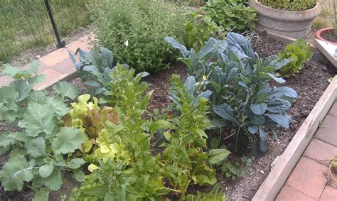 Starting An Organic Vegetable Garden Starting An Organic Garden Take Back Your Health With