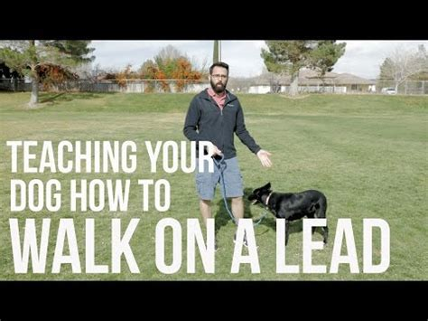 how to a not to pull on lead new leash walking trick for pulling ahead after a treat doovi