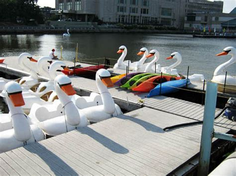swan boats penn s landing this week on the waterfront