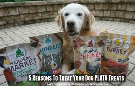 plato treats 5 reasons to treat your plato treats golden woofs