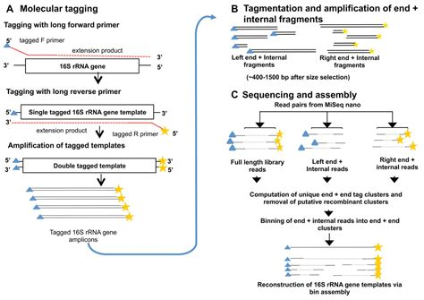 illumina sequencing protocol a method for high precision sequencing of near length