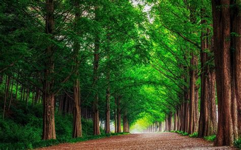 hd background green forest trees straight road wallpaper wallpapersbyte