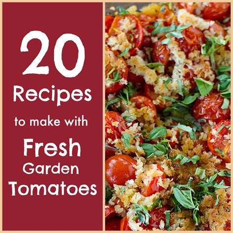 easy garden tomato sauce recipe dishmaps