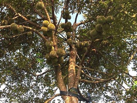kumpulan berbagai gambar pohon