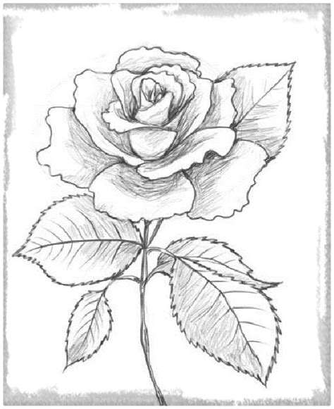 imagenes de rosas de amor para dibujar a lapiz rosas de amor para dibujar y regalar dibujos de amor a lapiz