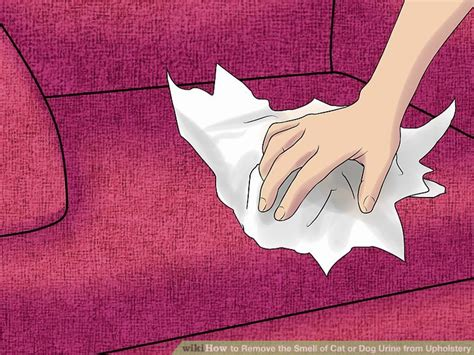 removing cat urine from upholstery the 2 best ways to remove the smell of cat or dog urine