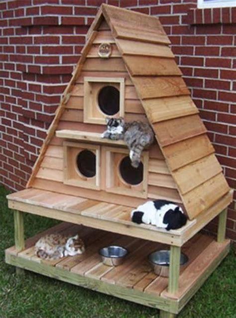 cassetta gatto casetta pets gatti gattini e interni casa