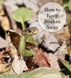 Garter Snake How To Get Rid Of by How To Get Rid Of Garter Snakes Gardens Garter And Yards
