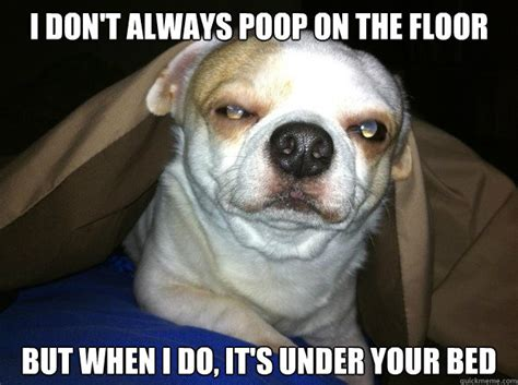 Dog Poop Meme - i don t always poop on the floor but when i do it s under your bed serious dog quickmeme