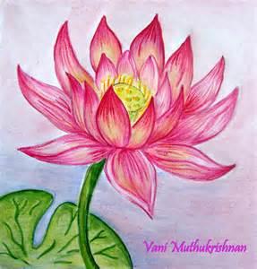 Lotus Colour Lotus Mypencilwork