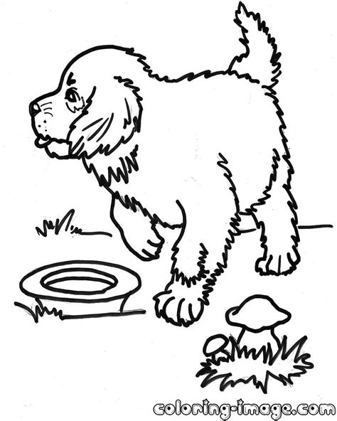 a puppy for bernard puppy for a walk free coloring pages for