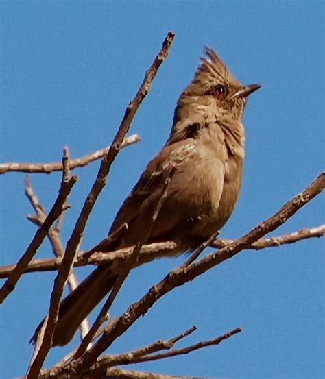 bird photos san diego california bird photos south