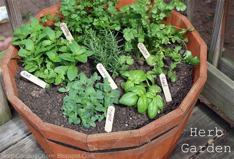 how to grow a herb garden in pots diy herb garden carolina charm
