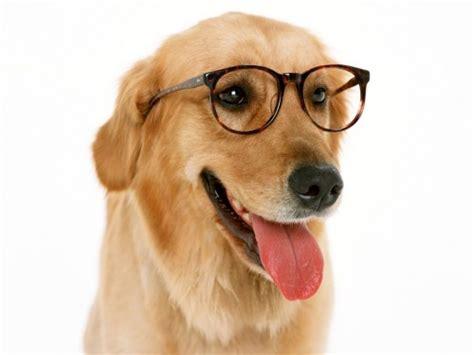 mr puppy mr screensaver