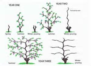 Make A Patio Table Grape Growing Spain Using Containers So As To Grow On