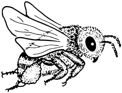 bumble bee outline clipart best