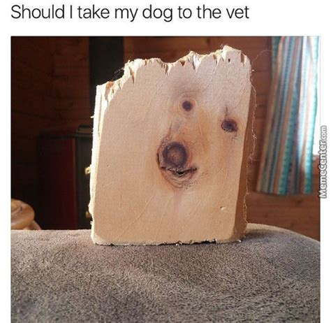 i think my has autism doggo memes best collection of doggo pictures