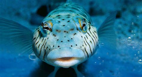 dive foto diving in maldives thailand oman japan spain croatia