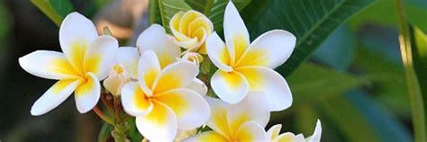 effetti fiori di bach fiori di bach ipsico firenze