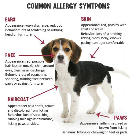can dogs allergies allergies that affect pets health