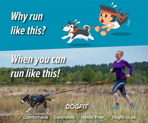 running with dogs running with your why use canicross equipment