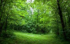 lush green forest path wallpapers lush green