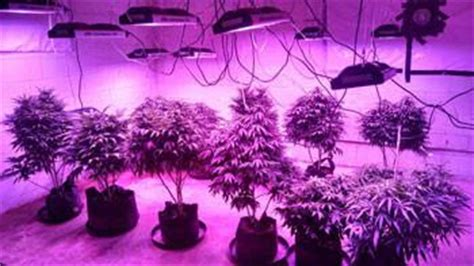 california lightworks led grow lights solar system 550 horticultural led grow lights