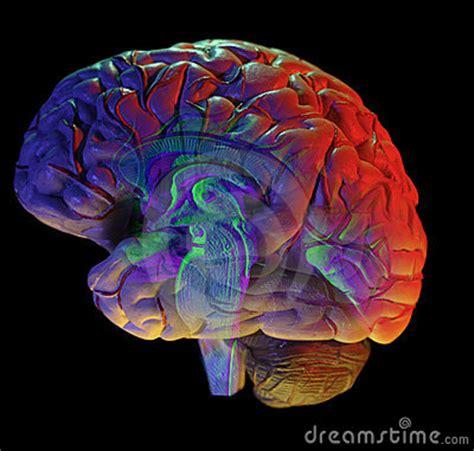 imagenes libres cerebro cerebro en negro foto de archivo libre de regal 237 as