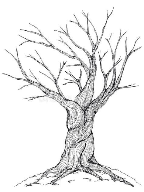 b tree drawing tool bare tree illustration stock vector illustration of
