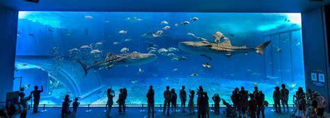 japanese aquarium the okinawa churaumi aquarium arch into japan