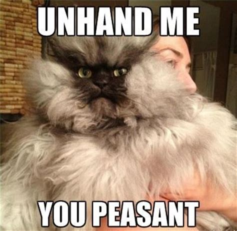 Best Cat Memes - 50 best cat memes 2 funny cat memes