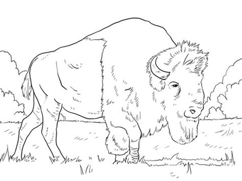 Bison Bird Coloring Coloring Pages Bison Coloring Page