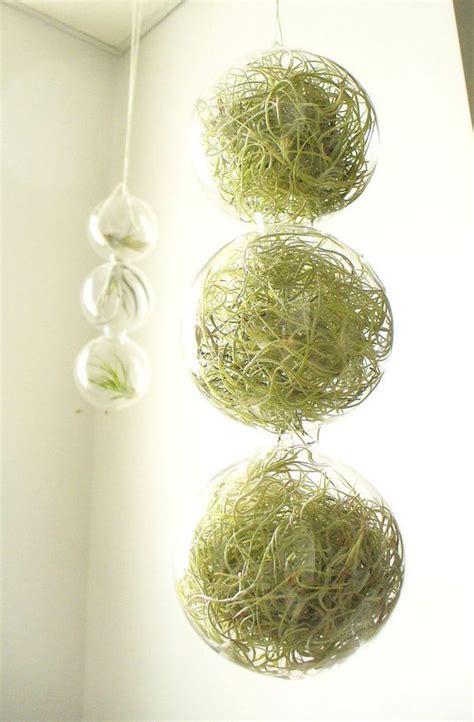 hanging planters  container garden ideas  indoors