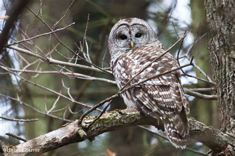 top 28 types of owls in pa endangered species bill may