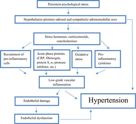 pathophysiology of hypertension flowchart most accessed article psychological stress in