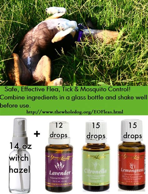 essential oils for fleas on dogs 1000 images about essential oils on living essential oils