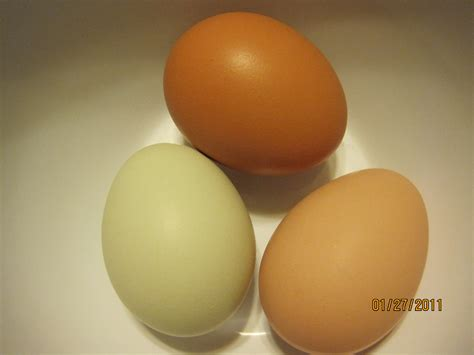do chickens lay colored eggs backyard chickens patty cake s pantry