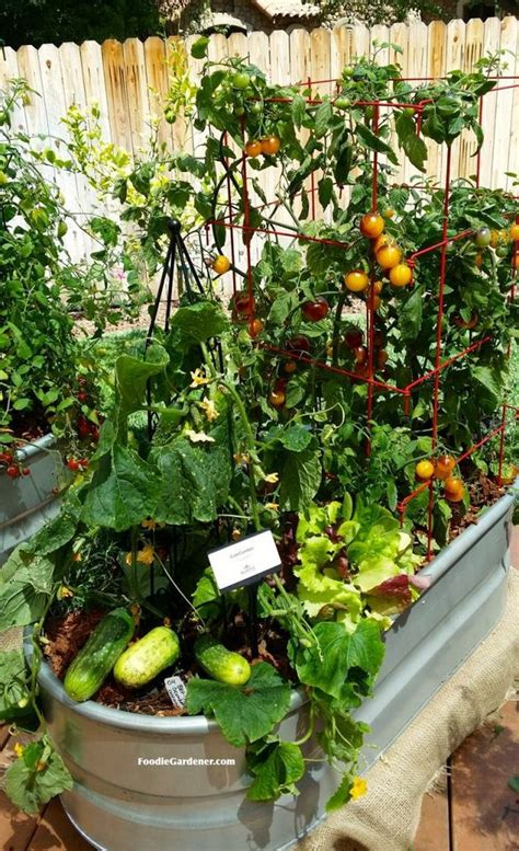 17 best container vegetables garden for beginning