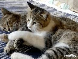 imagenes gif en whatsapp 88110 gatos gif imagenes divertidas para whatsapp